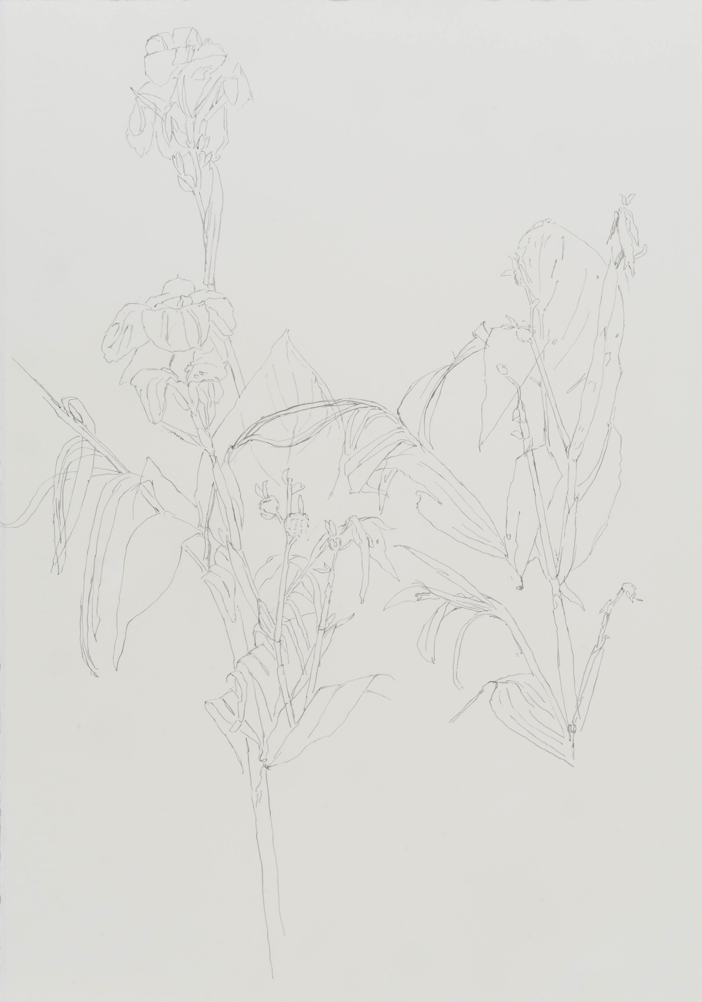 Orto botanico 2018